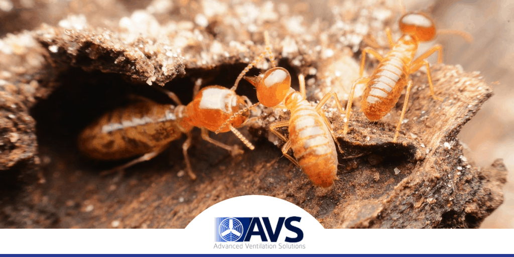 Crawl Space Termite Damage in Hickory, NC, 28601, Burke County (9752)