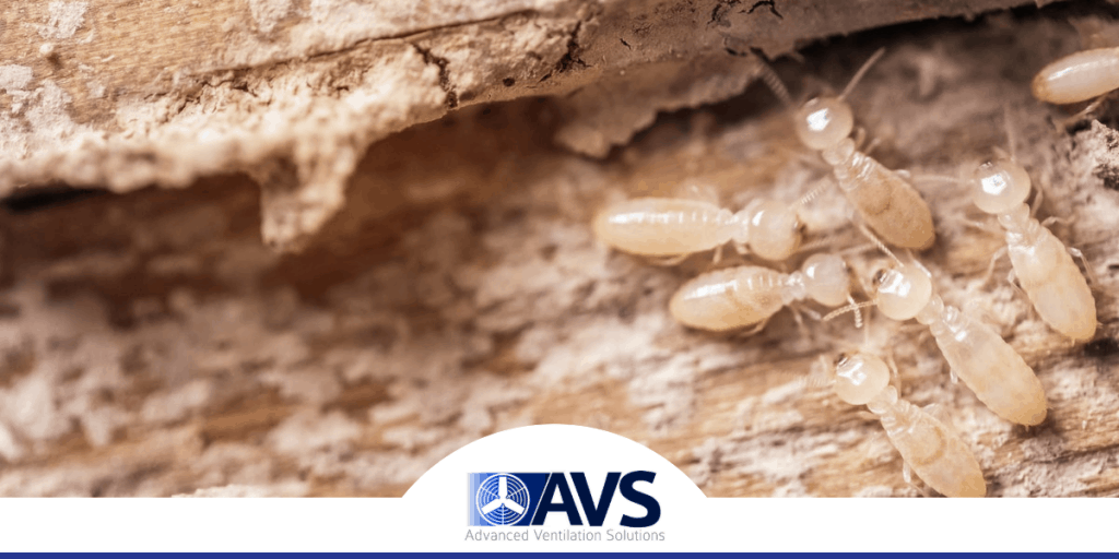 Basement Termite Damage in Newton, NC, 28613, Catawba County (3949)